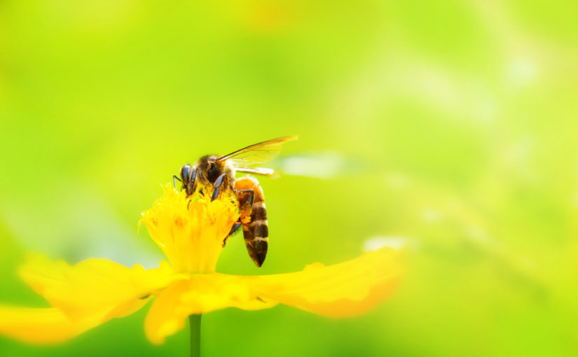 Bee Removal in Pompano Beach