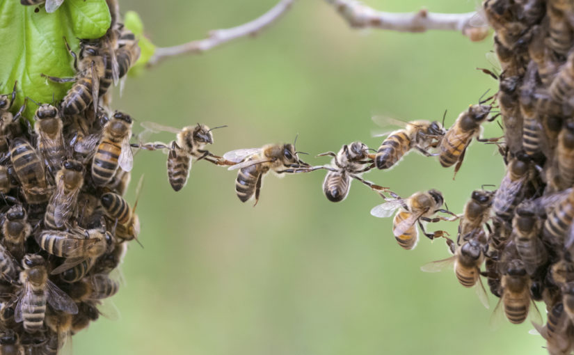 south florida bee control